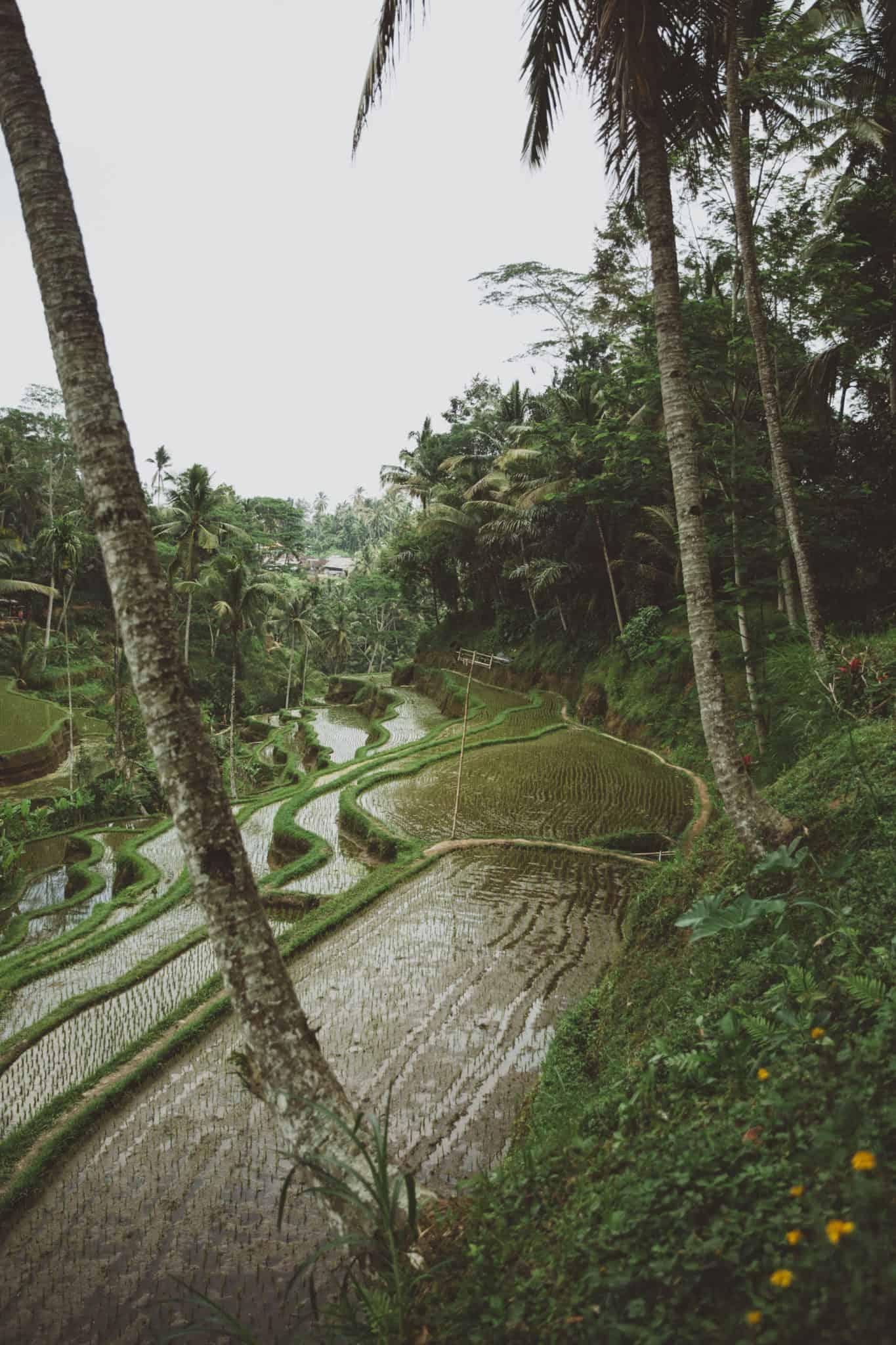 Emily Mandagie in the Tegalalang Rice Terraces, Ubud, Bali - TheMandagies.com