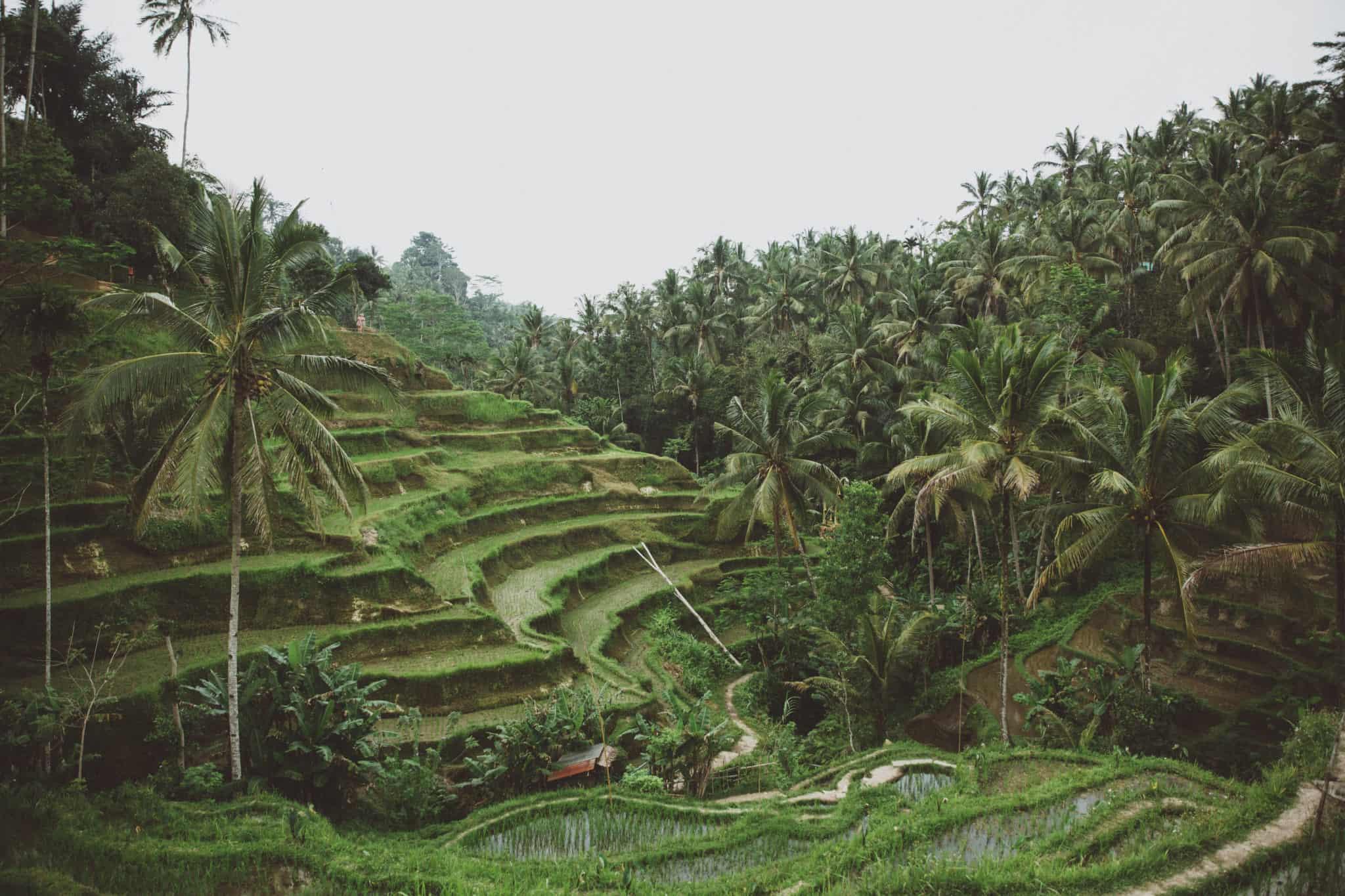 bali-Tegallalang Rice fields