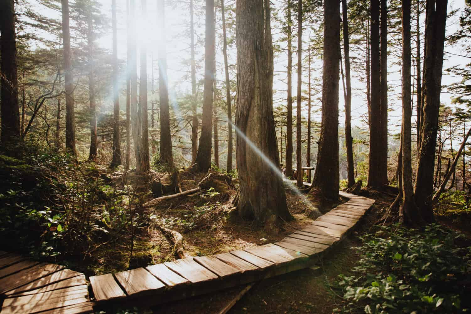 Boardwalks in Cape Flattery, Washington - TheMandagies.com
