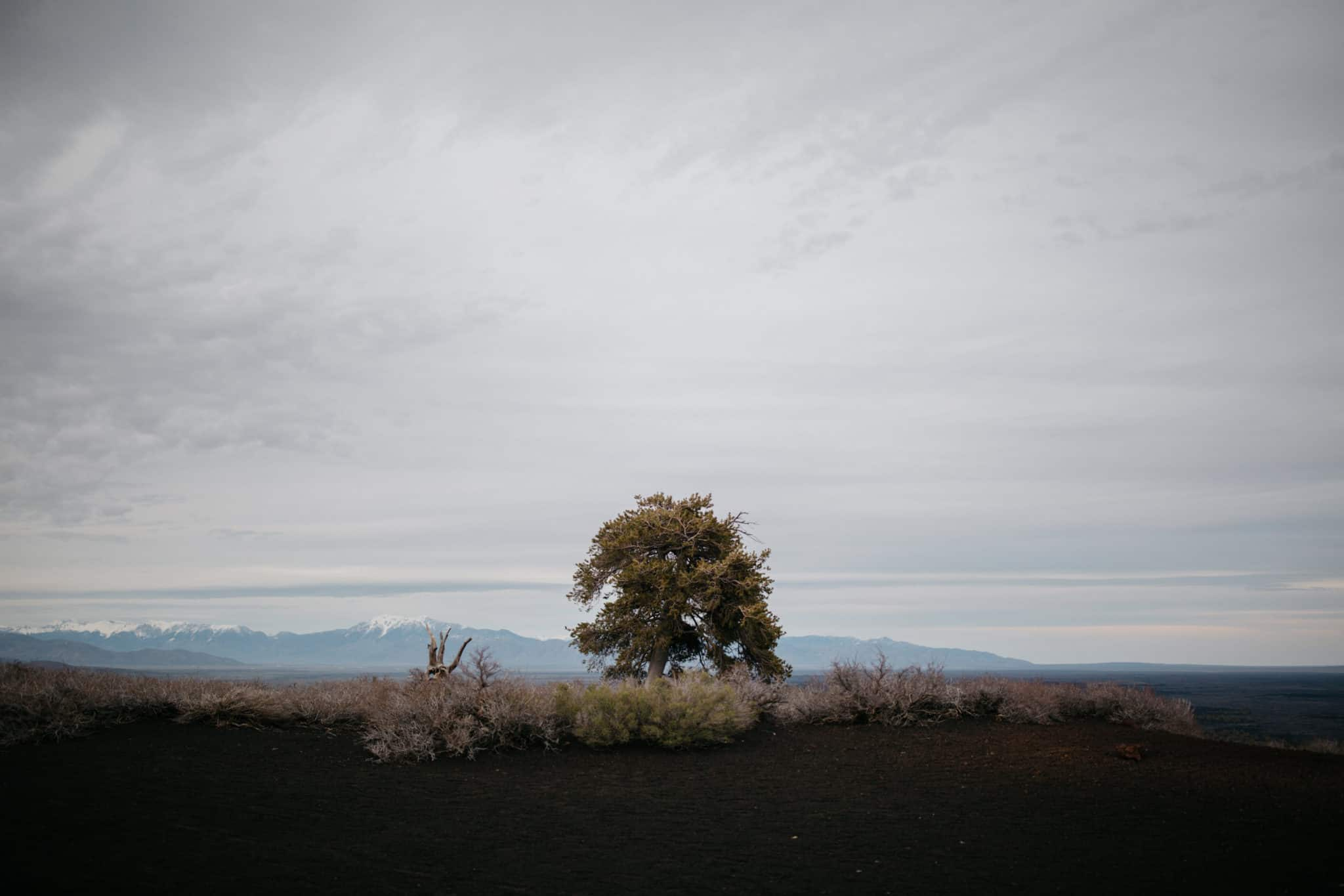 Lone tree at Craters Of The Moon National Preserve
