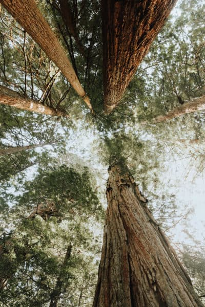 Driving Through Redwood National Park