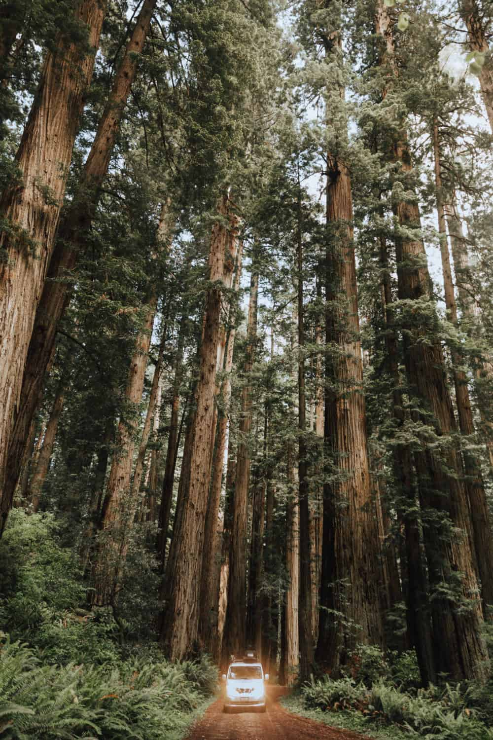Road trip to Northern California - Redwoods National Park