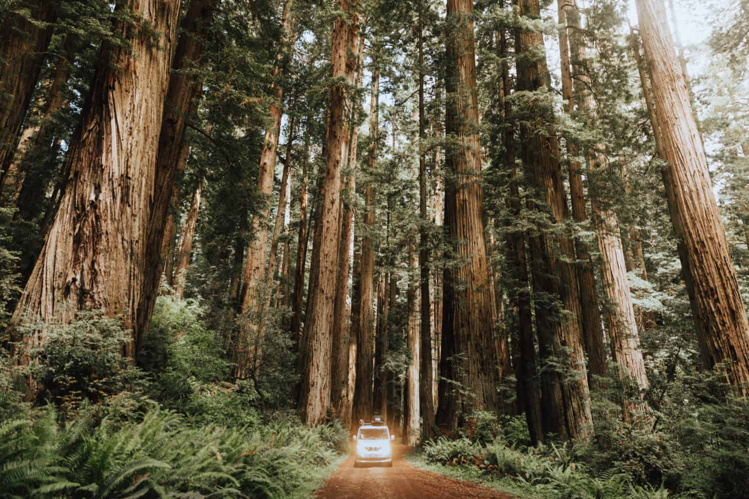 Things To Do In The Pacific Northwest (California State)