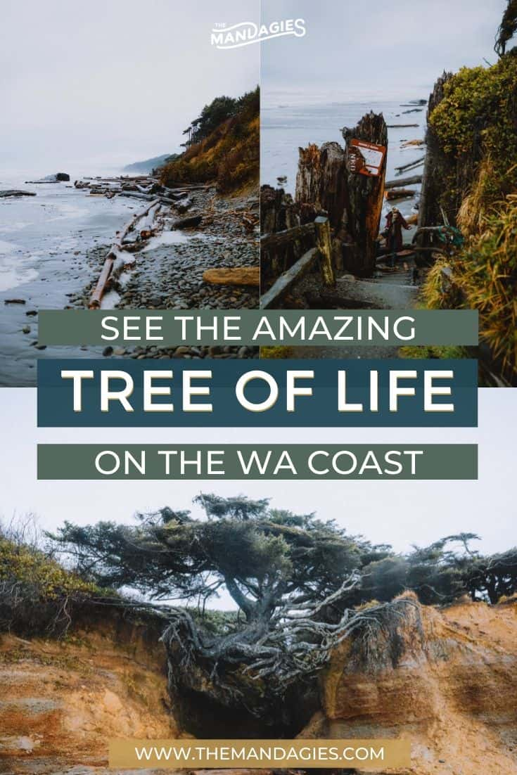 Discover one of the best hidden gems in Washington State! The Kalaloch Tree is a phenomenon in the Olympic National Park waiting to be discovered by you! Discover how to get here, what's nearby, and how to make the most of your trip to the Washington Coast. Save this post for a future trip to the Pacific Northwest! Save this post for your next trip to Washington State! #olympicnationalpark #Washington #PNW #pacificnorthwest #kalalochtree #treerootcave #hiking #photography #ocean