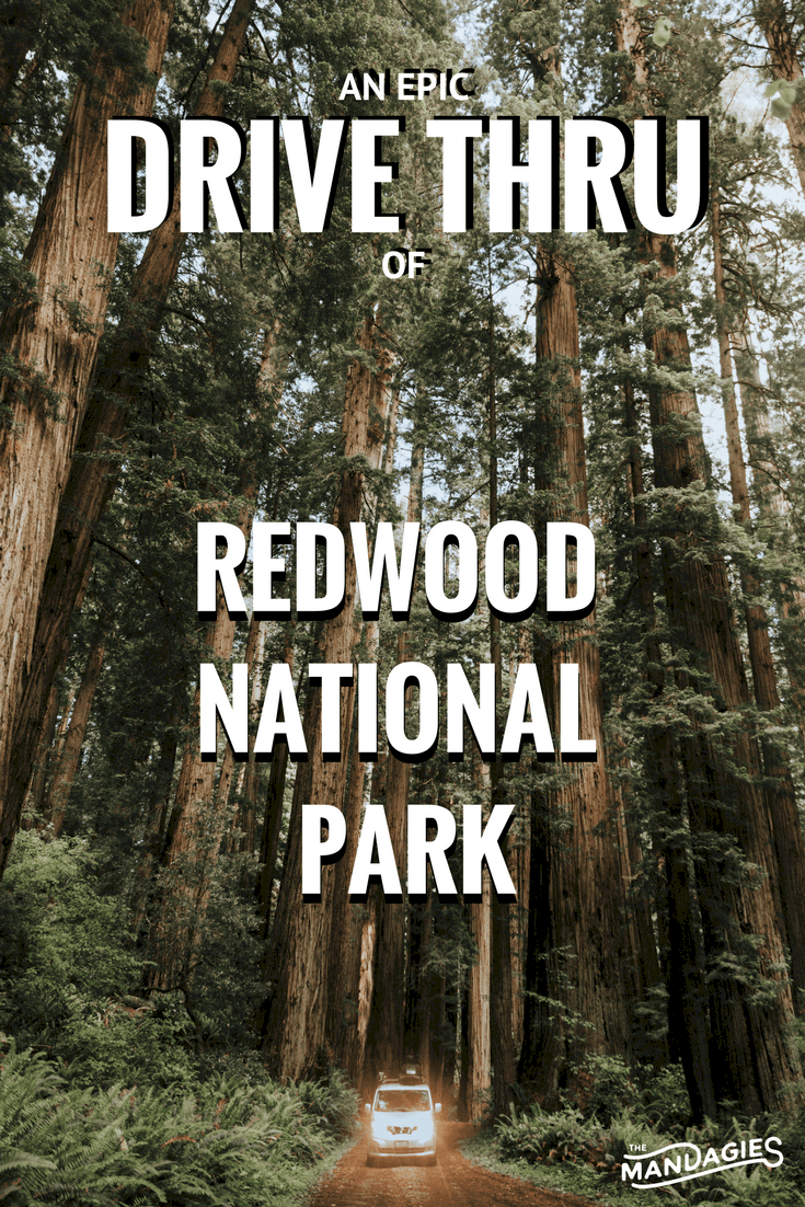 Discover the Redwood National Park of California! We're sharing what roads to see, where to go, and our experience through pictures on our latest road trip! #roadtrip #california #pacificcoast #redwoods