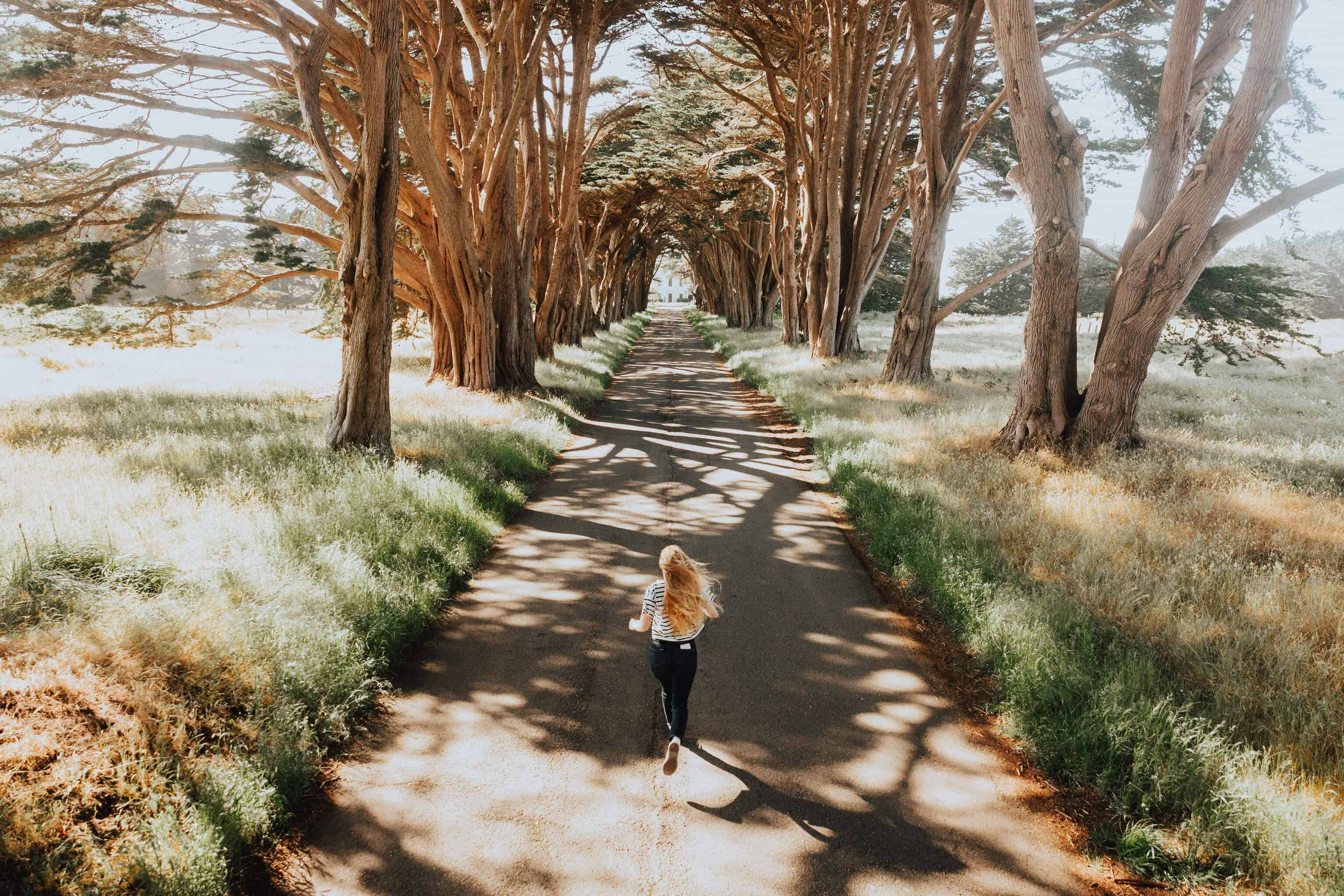 Pacific Coast Highway Road Trip Stops - Cypress Tree Tunnel