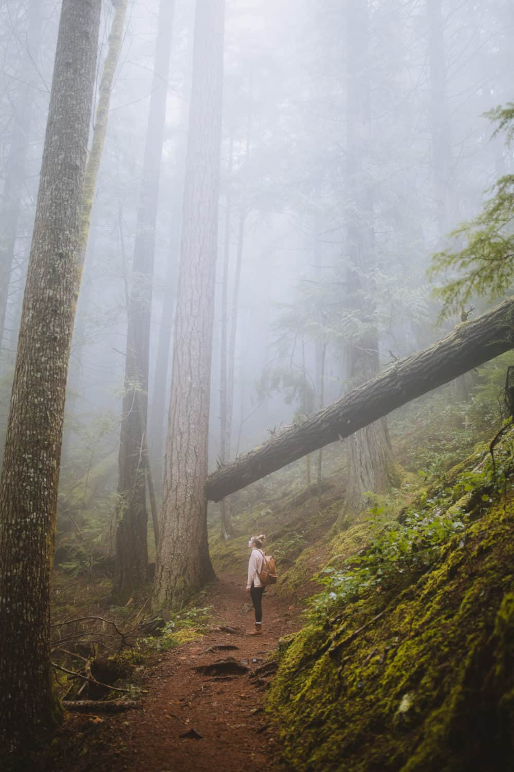 Emily Mandagie - Hikes In Washington State - Mount Storm King, Olympic National Park