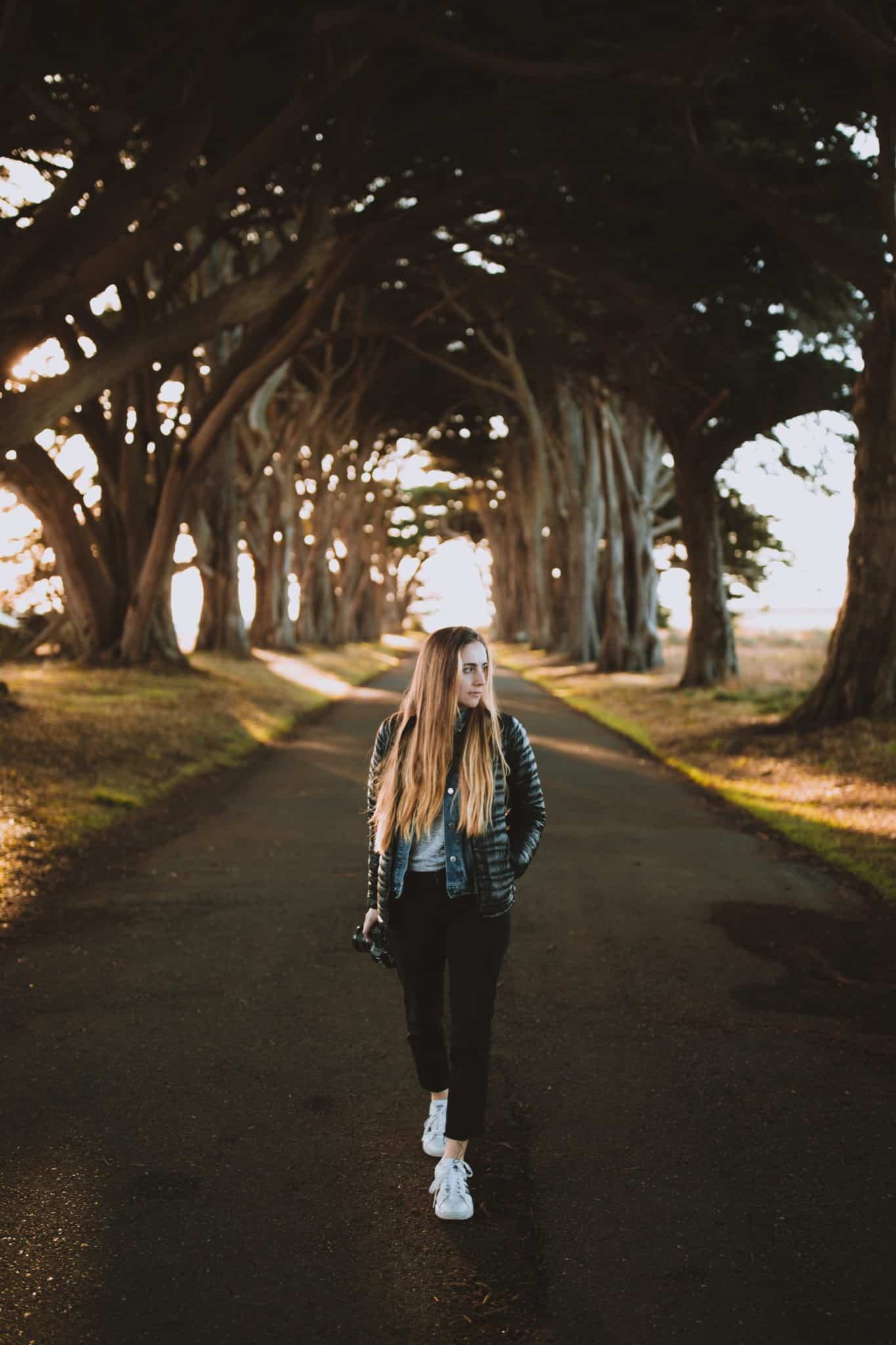 Cypress Tree Tunnel - TheMandagies - Things To Do In San Francisco Post