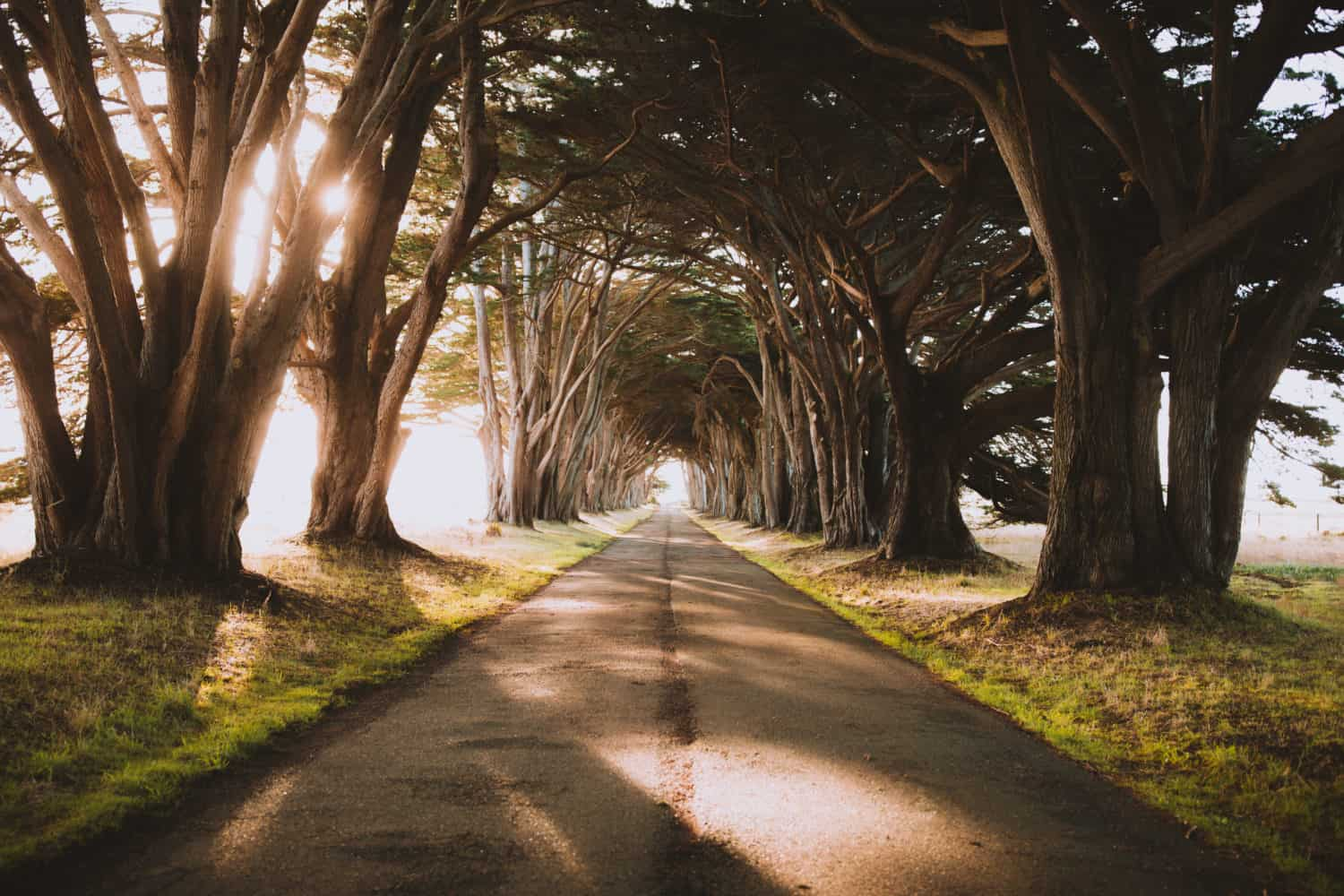 Northern California Road Trip Itinerary - Cypress Tree Tunnel in Point Reyes National Seashore