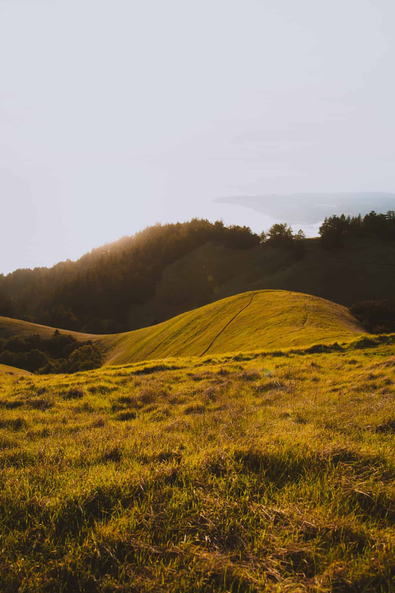 Bolinas Ridge - The Mandagies