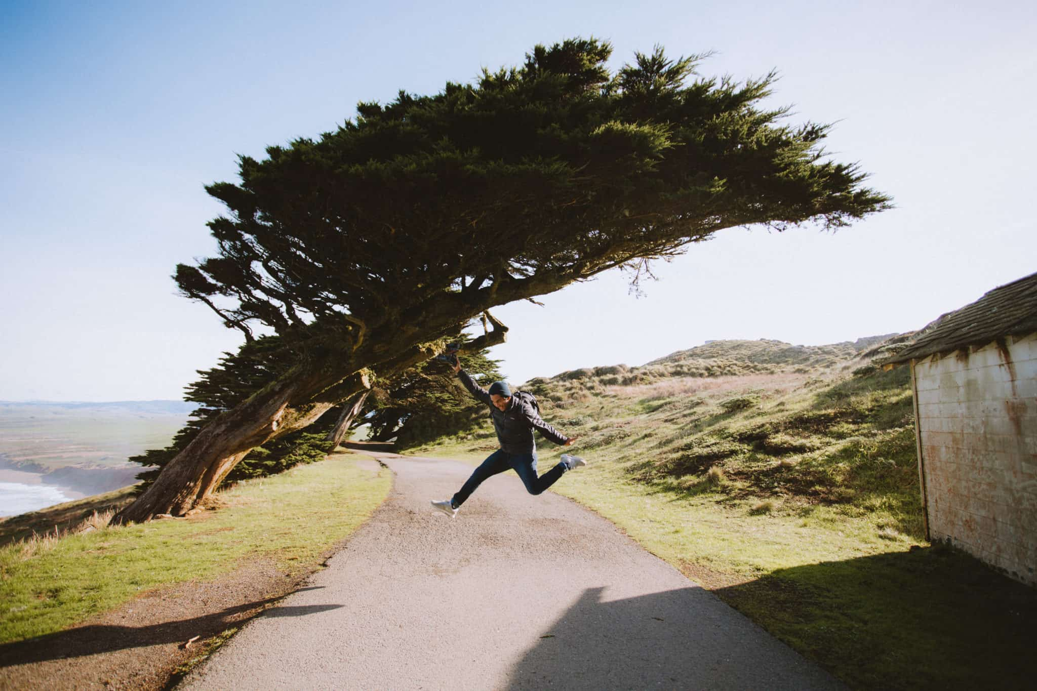 Leaning Tree at Point Reyes - TheMandagies
