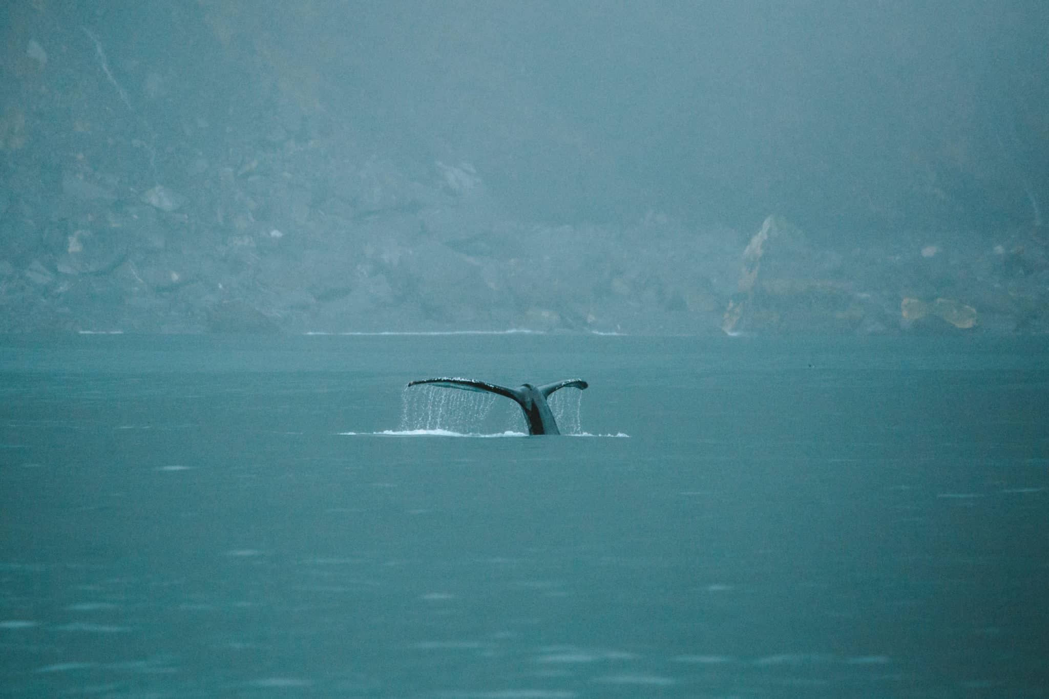 Major Marine Gray Whale Tour -TheMandagies.com
