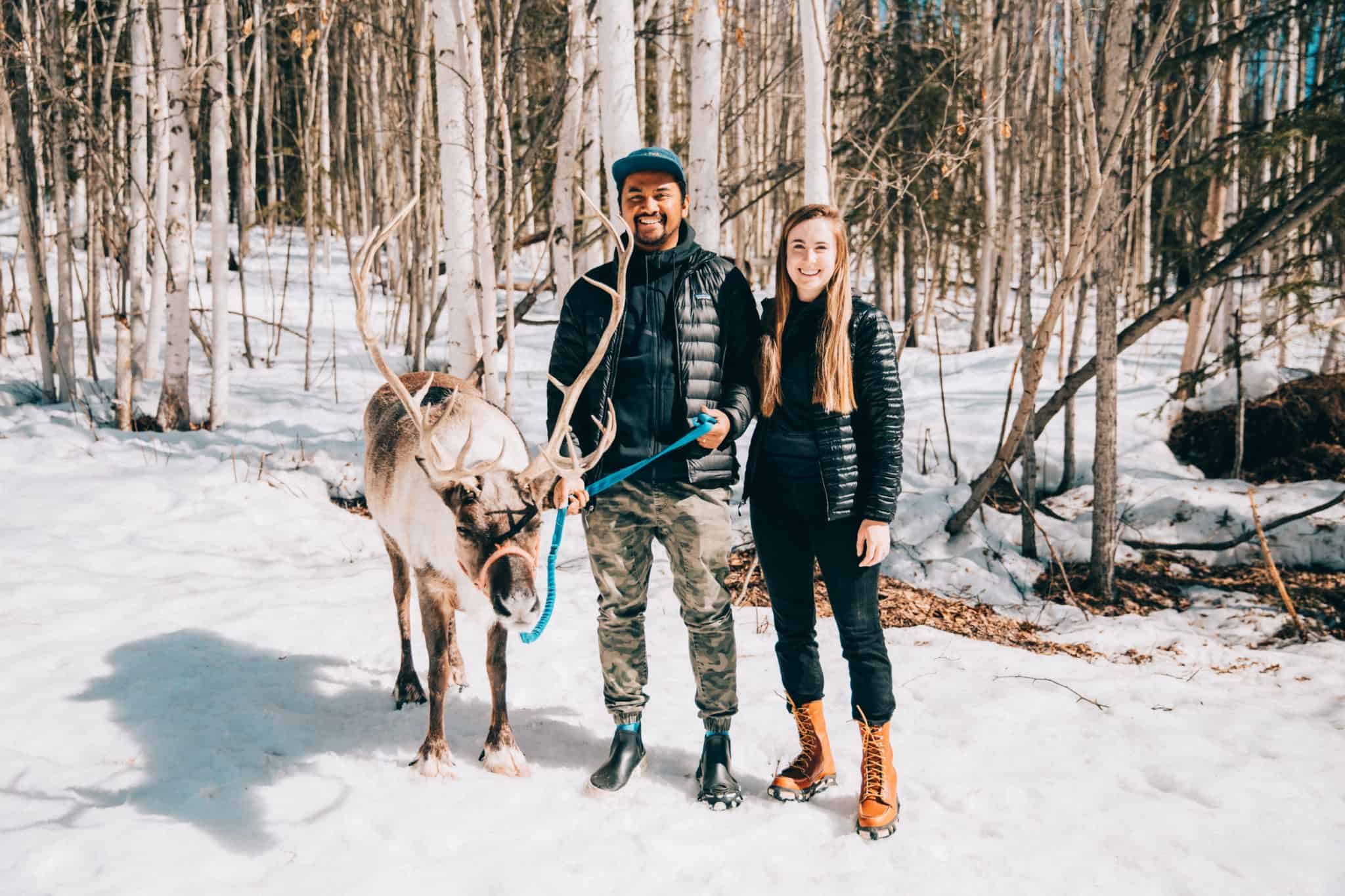 Things To Do In Fairbanks - Running Reindeer Ranch