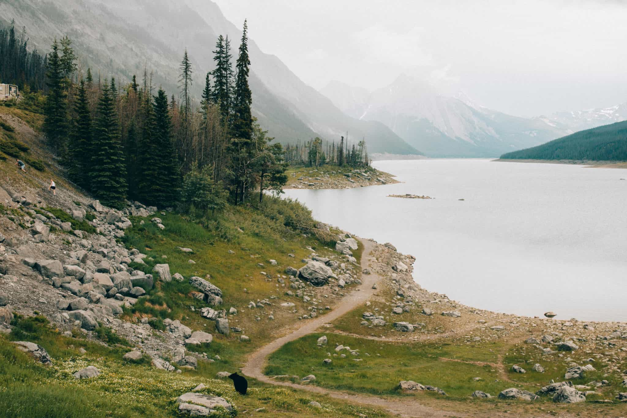 Things to do in Banff - Watch Wildlife
