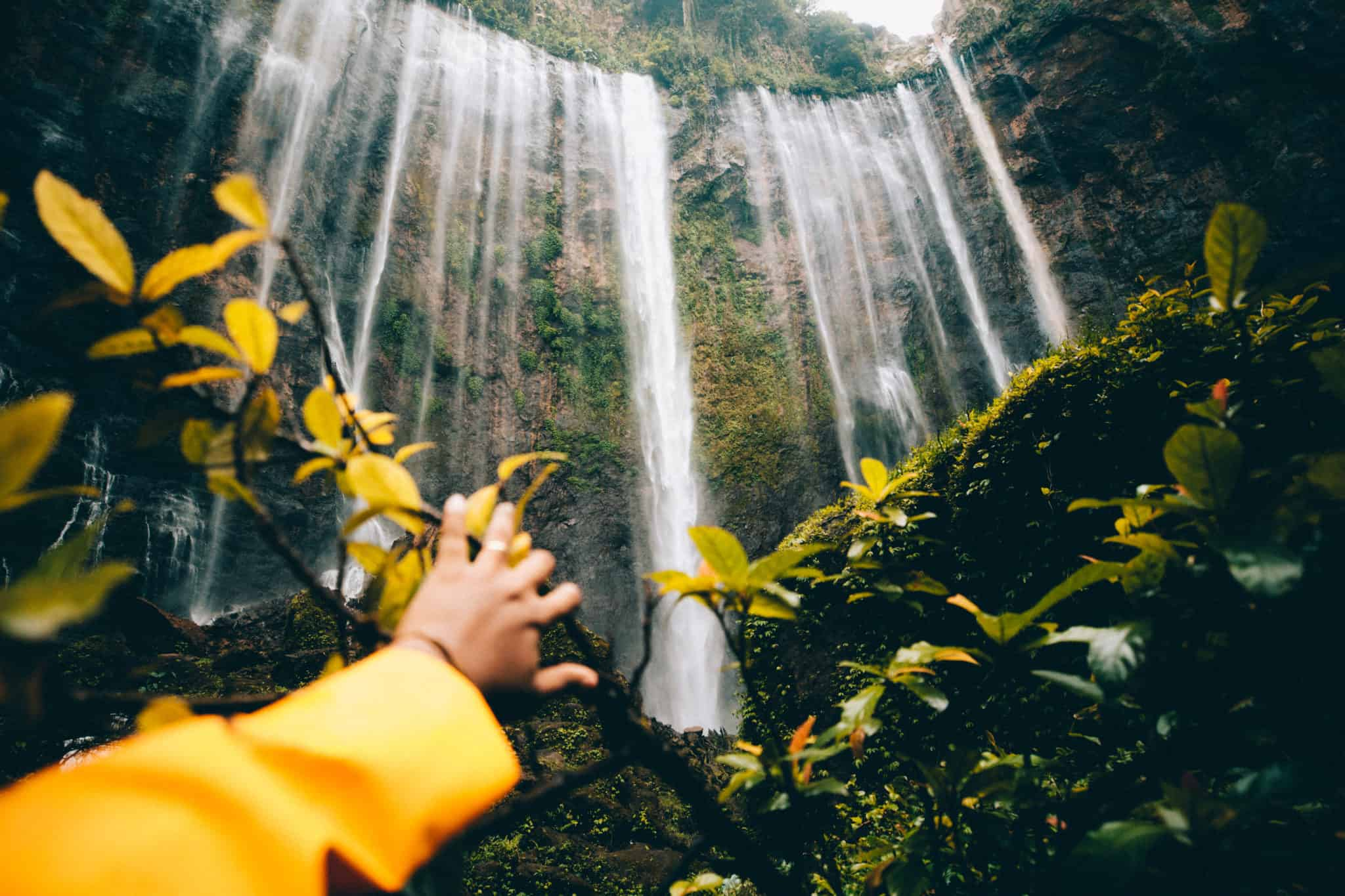 Berty peeking at Tumpak Sewu waterfall behind leaves