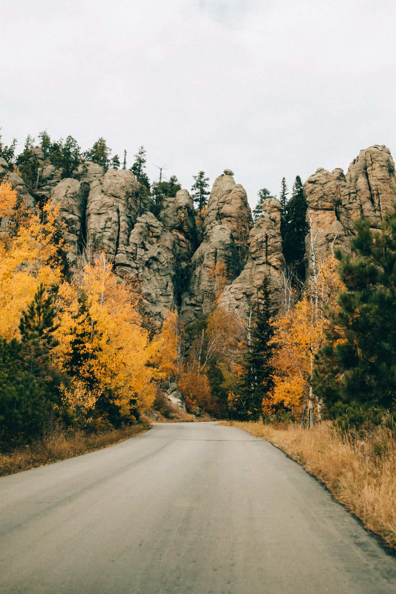 autumn in South Dakota, trees on Needles Highway