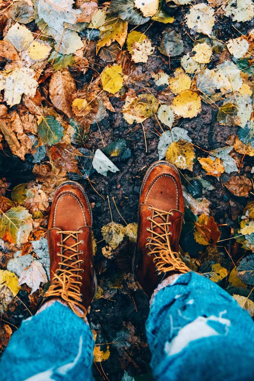 Fall leaves in Upstate New York - TheMandagies.com