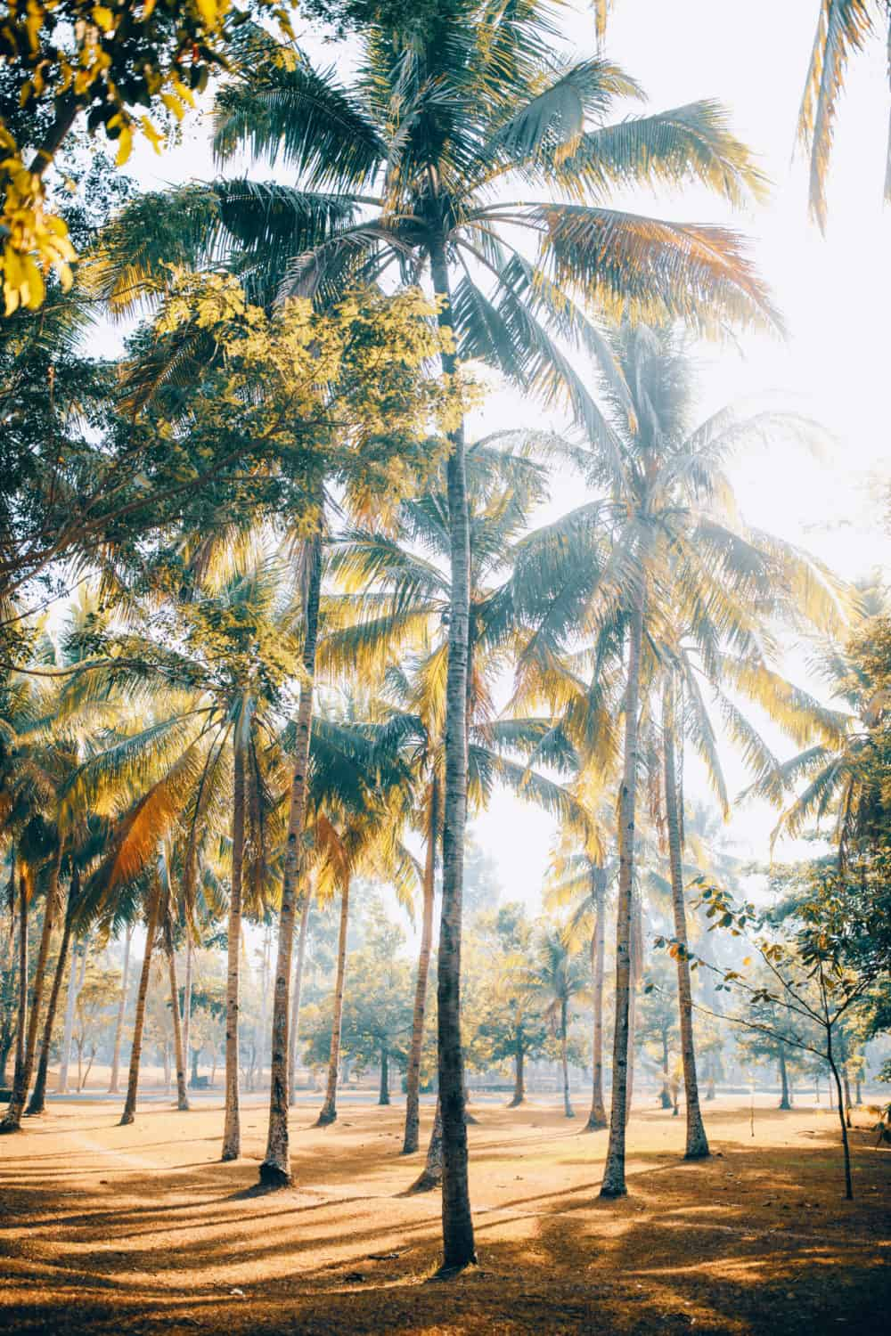 Palm Trees - Things To Do In Yogyakarta, Indonesia - TheMandagies.com