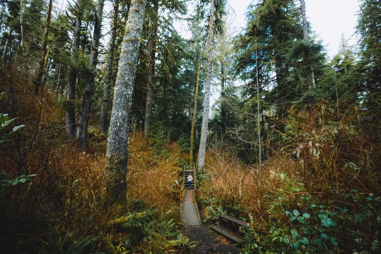Oregon Coast Road Trip Stop - Cathedral Tree