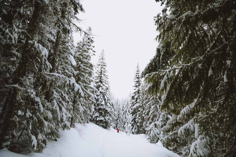 Snowshoeing in Ferwood, Idaho - TheMandagies.com