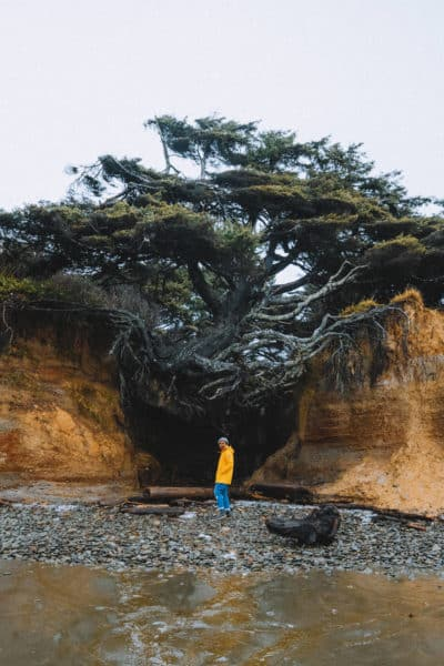 The Perfect 24 Hour Itinerary To The Kalaloch Lodge and Tree Root Cave In Washington