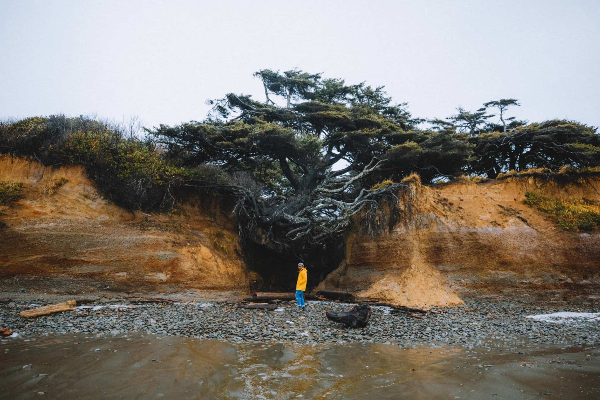 The Perfect 24 Hour Itinerary To The Kalaloch Lodge And Tree