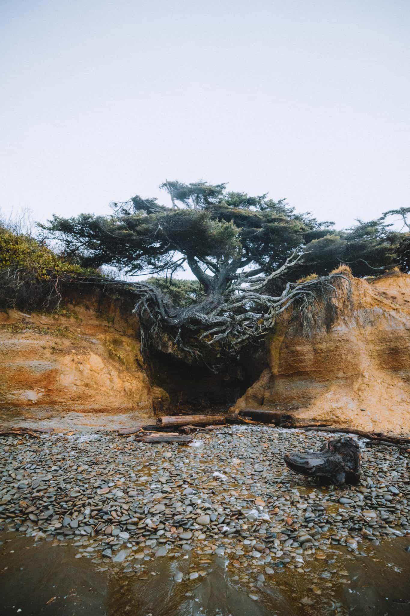 view of Tree Root Cave on Washington Coast