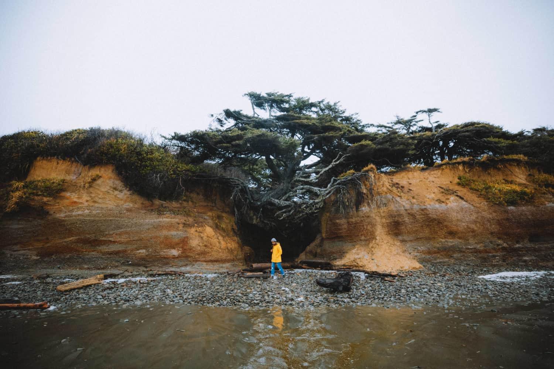 Berty next to the tree of life kalaloch beach