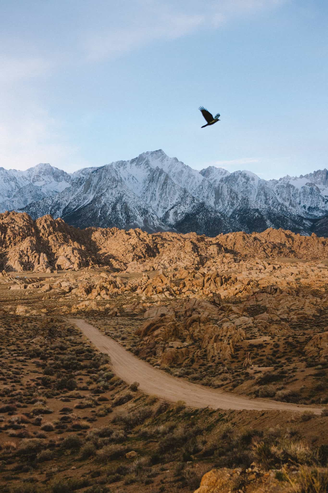 bird flying at Alabama Hills Movie Road - sunrise