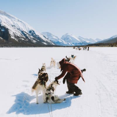 Dog Sledding In Banff – Absolutely Everything You Need To Know (Prices, Reviews, And Ethics)