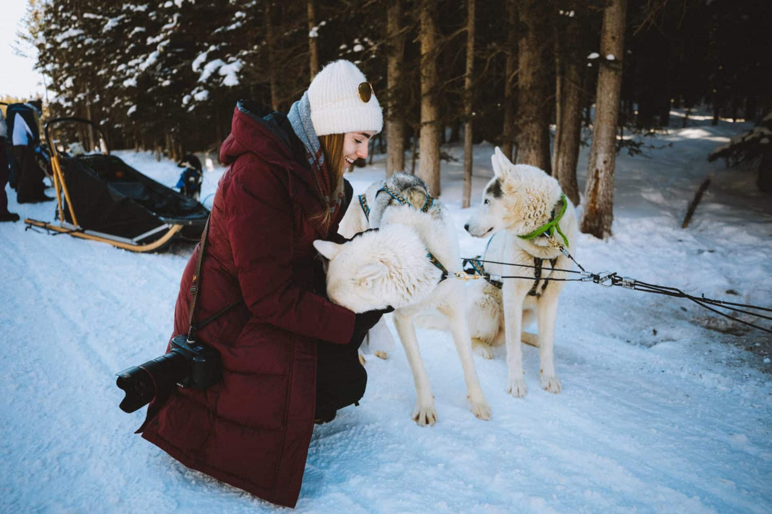 Emily Petting Banff Sled Dogs - TheMandagies.com