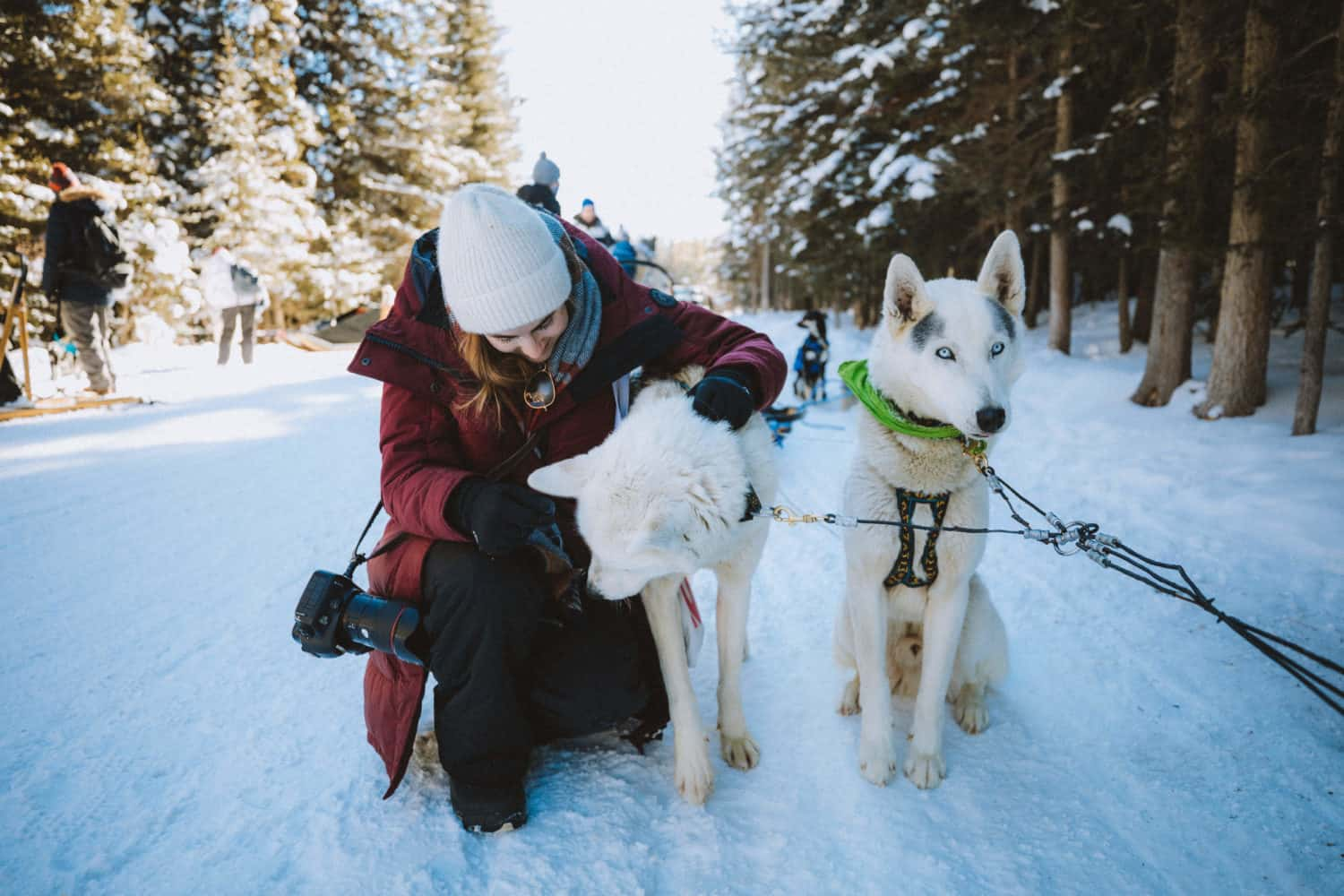 Petting Dogs before dog sledding in Banff - TheMandagies.com