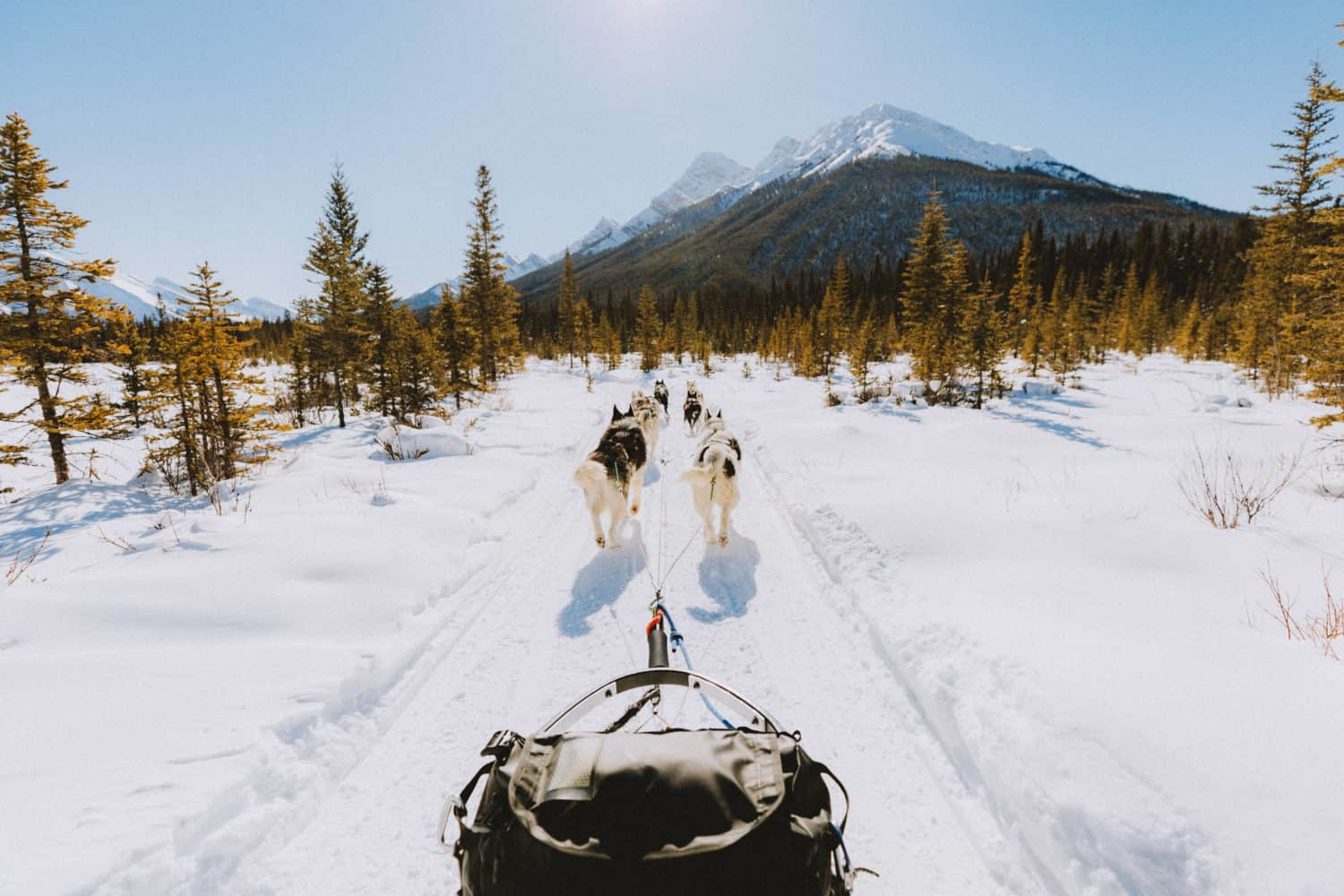 Dog sledding in Banff - TheMandagies.com