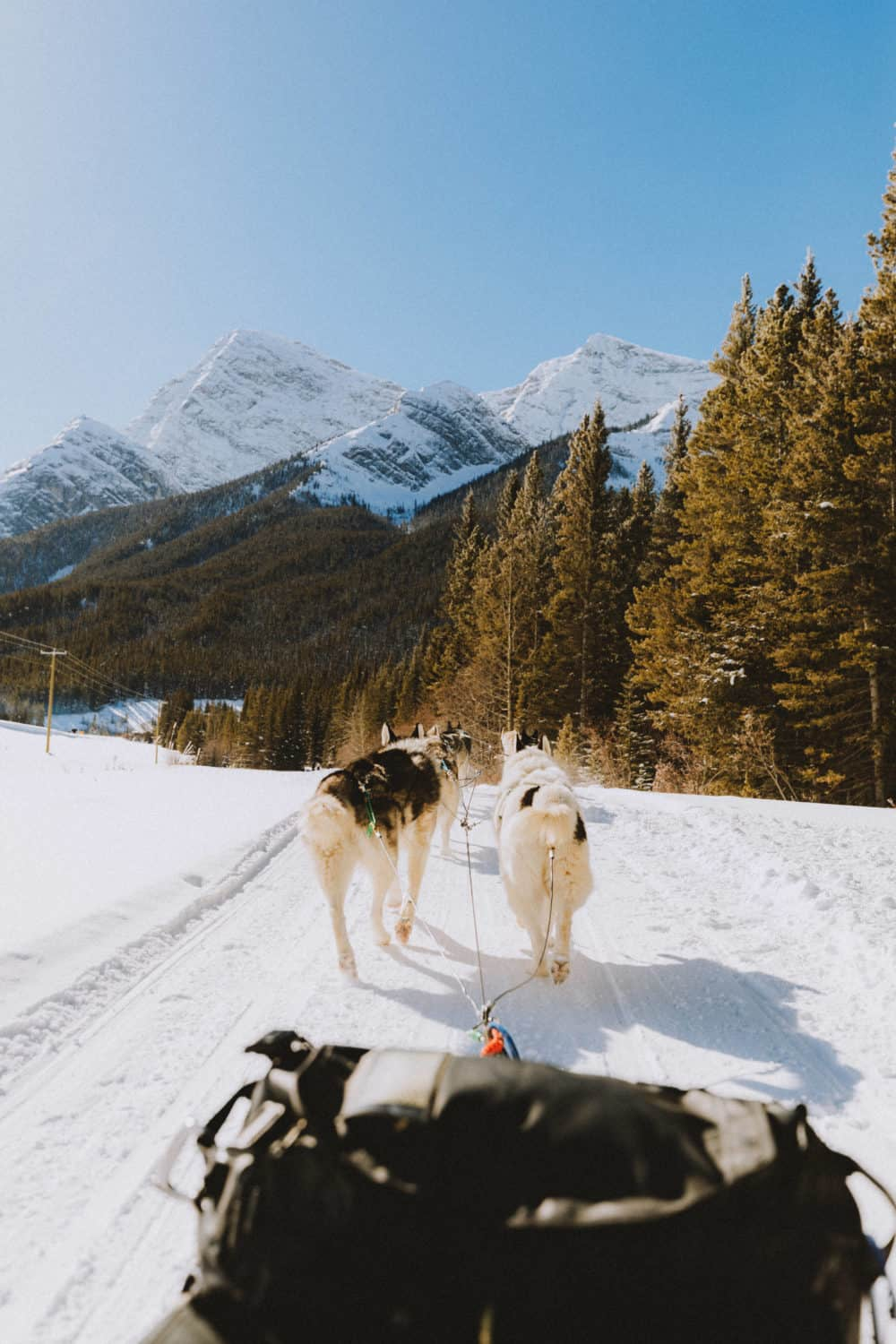 dog sledding on a winter track in Banff - themandagies.com