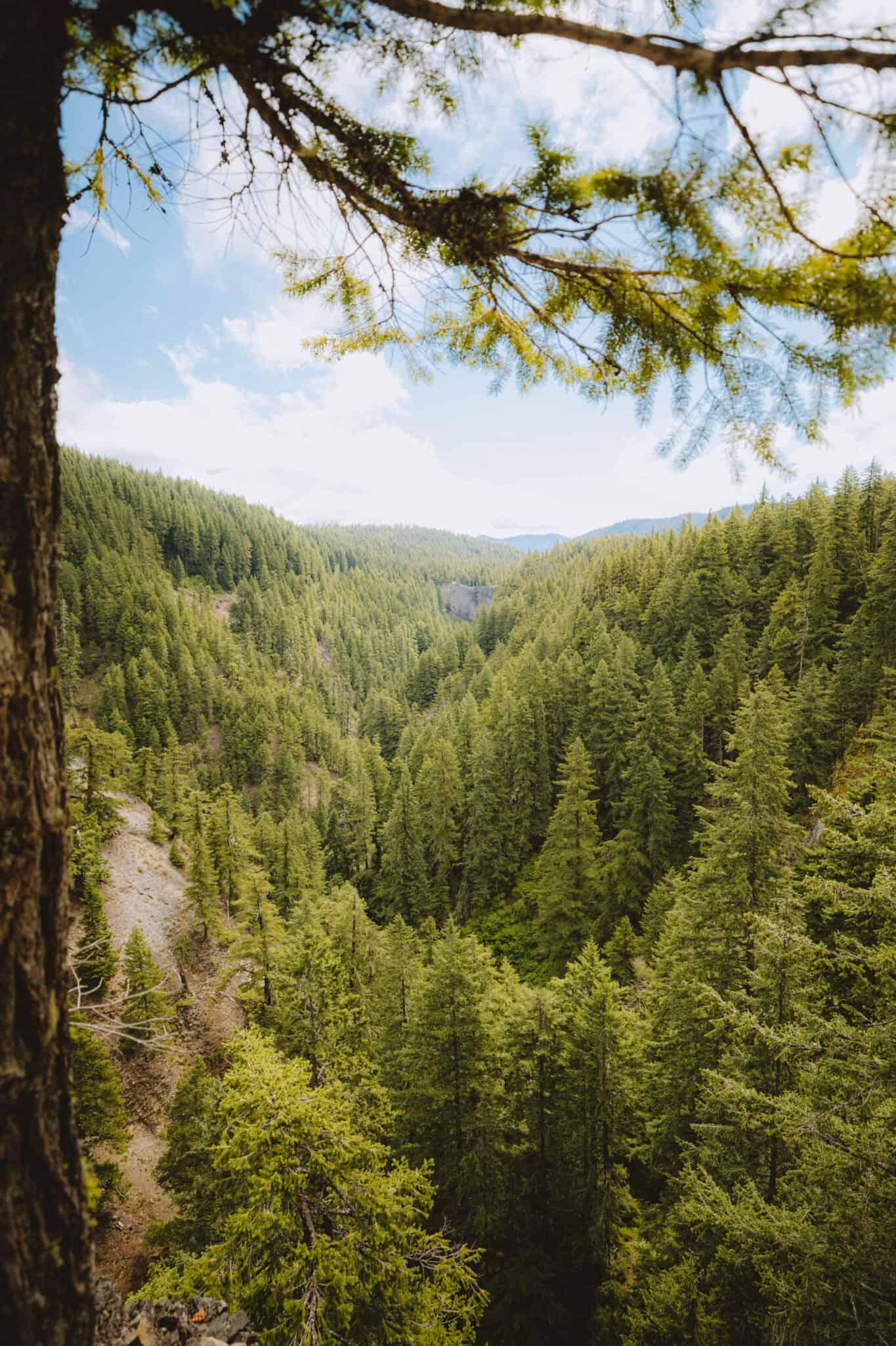 View of Salt Creek Falls Gorge