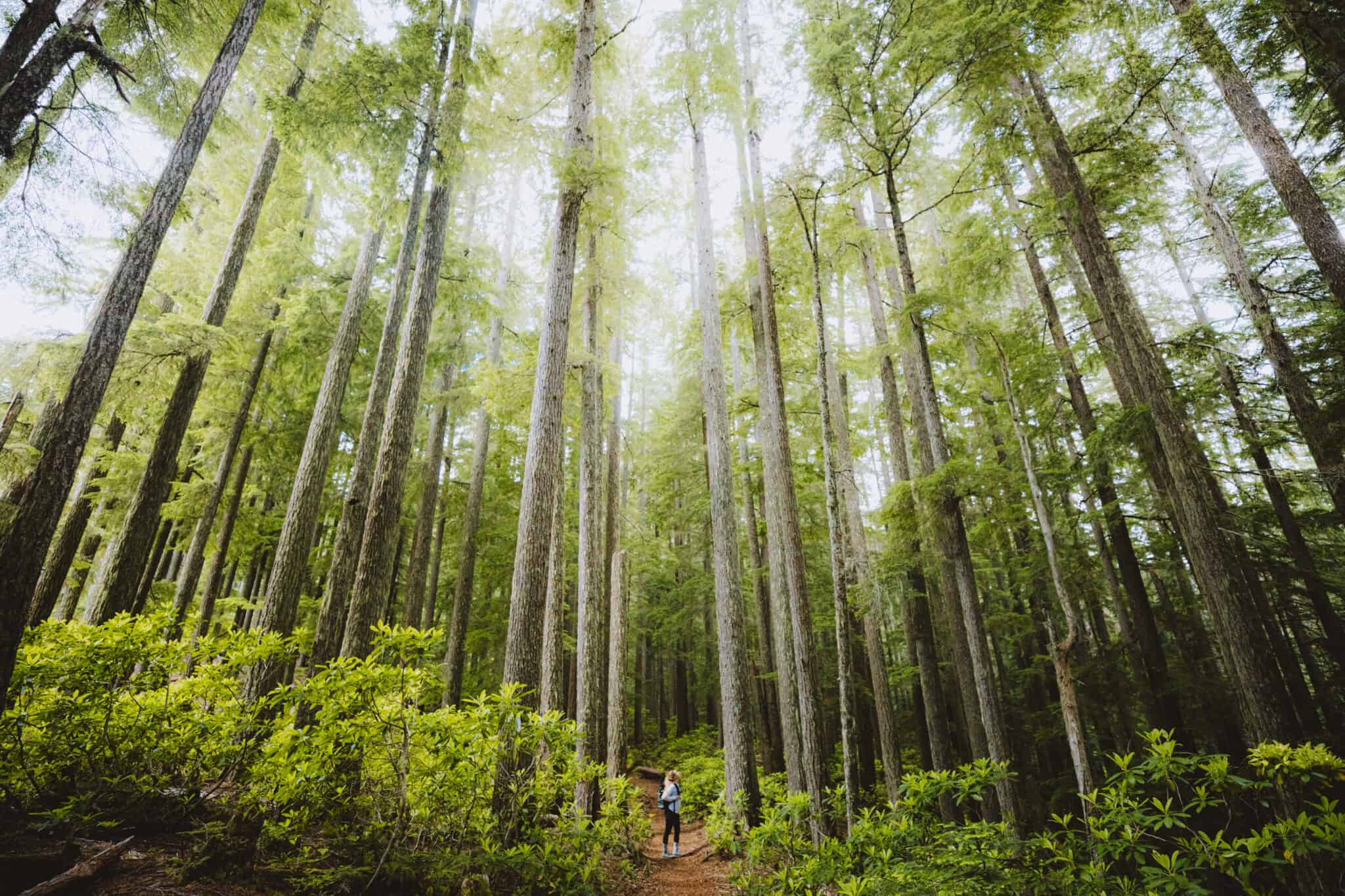 Forest Bathing: Why You Should Try This Natural Immersion Experience