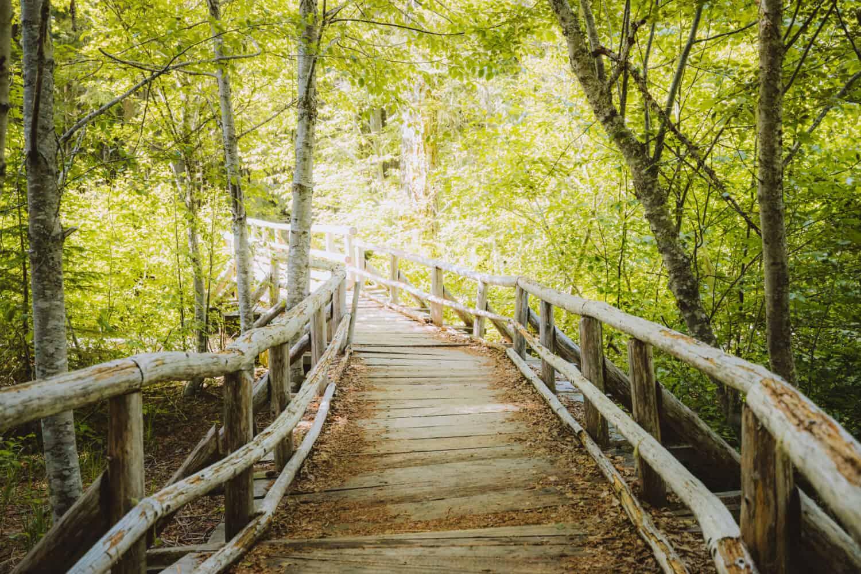 Wooden bridge at Diamond Creek Falls hike