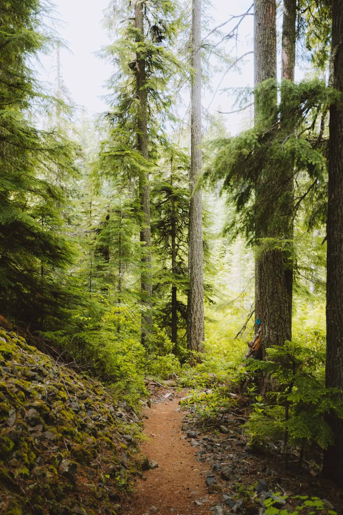 Along the Diamond Creek Falls trail