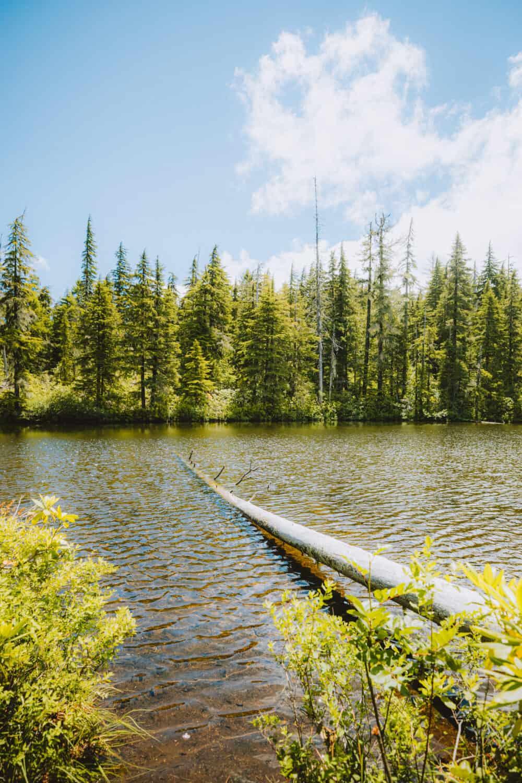 View of Too Much Bear Lake - TheMandagies.com