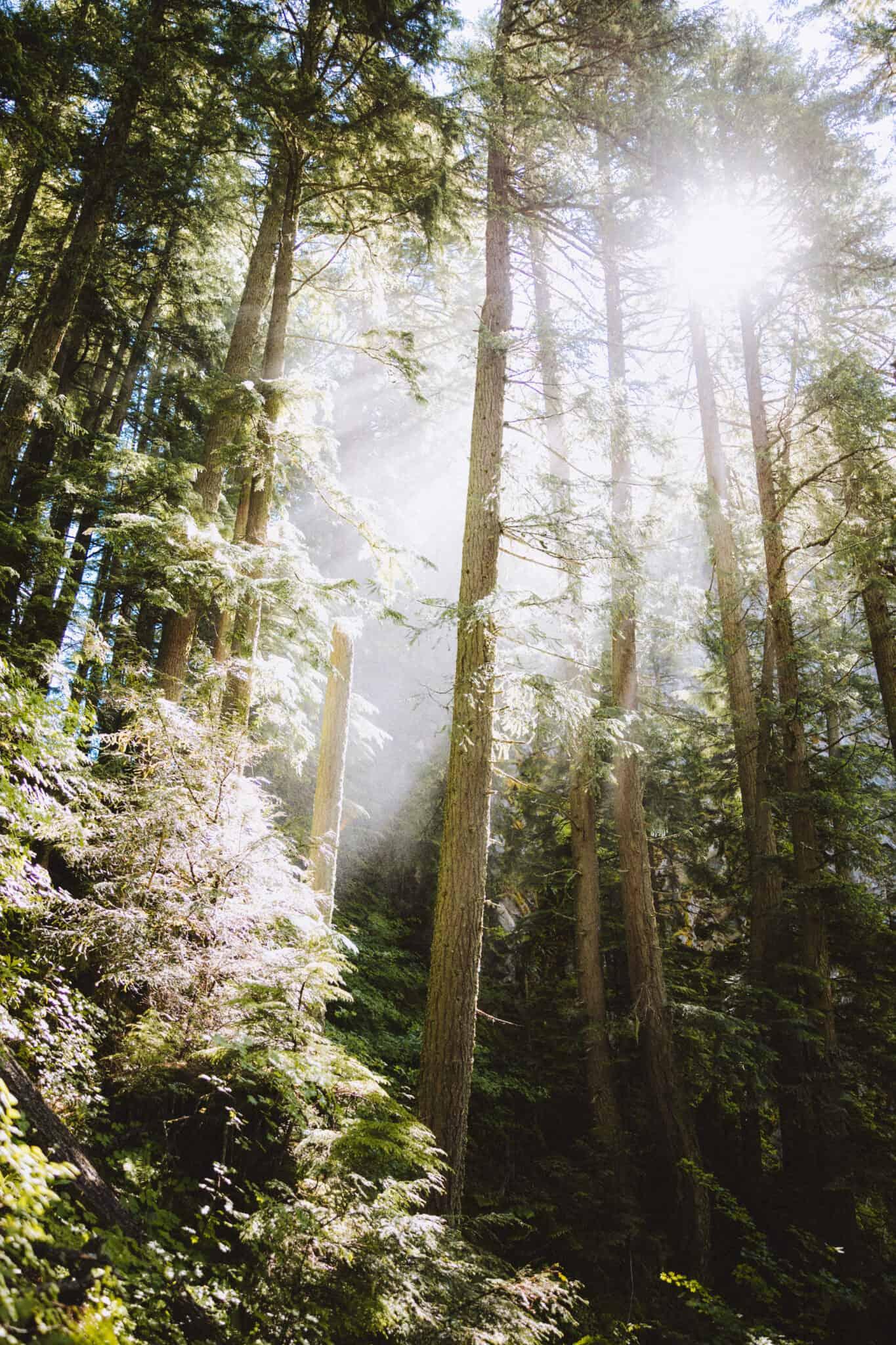 Sun rays on Salt Creek Falls Trail