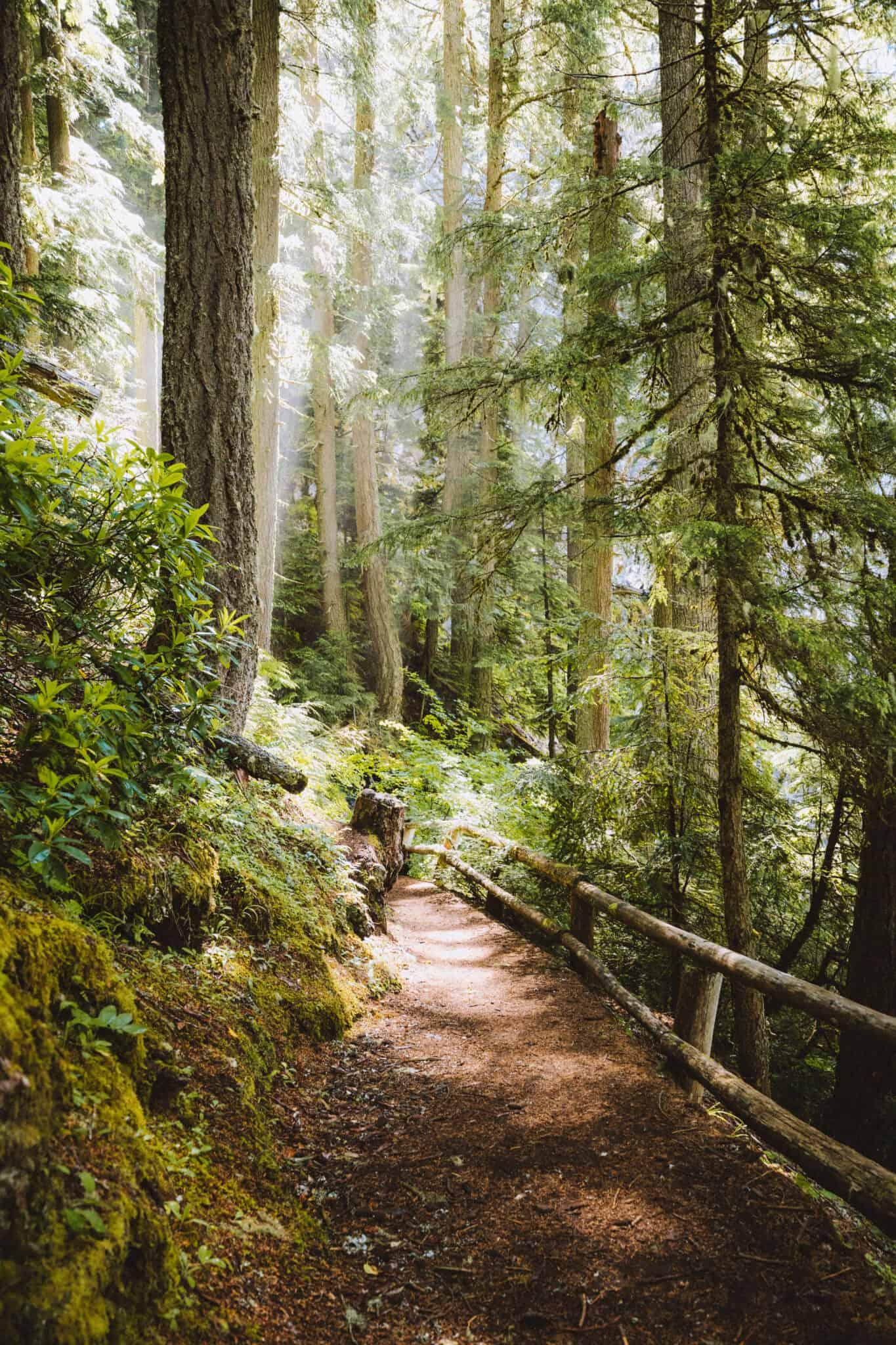Trail down to Salt Creek Falls