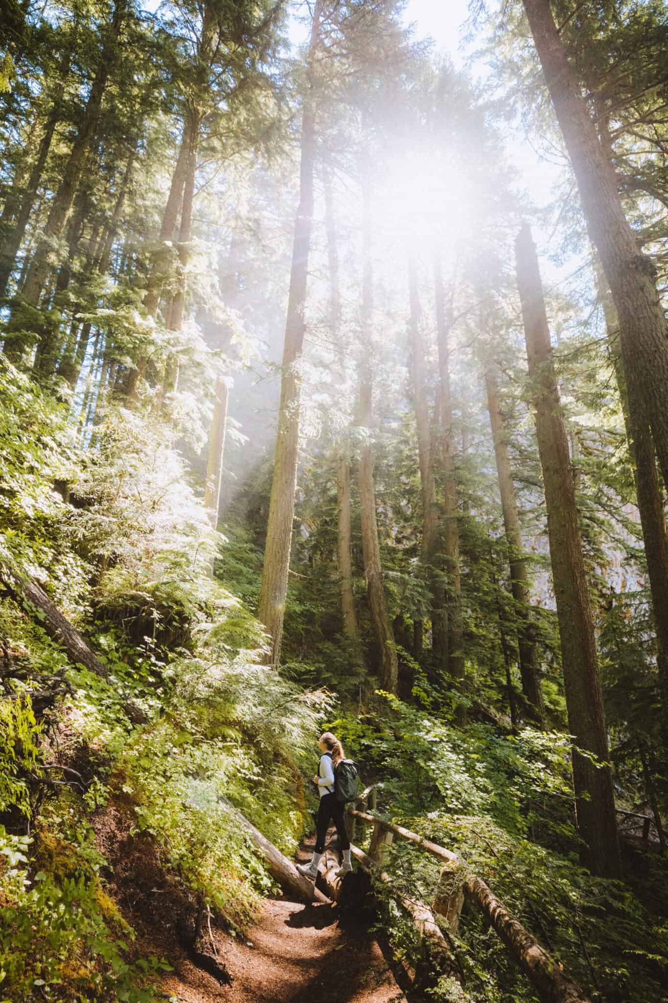 Emily is sun rays on Salt Creek Falls Trail