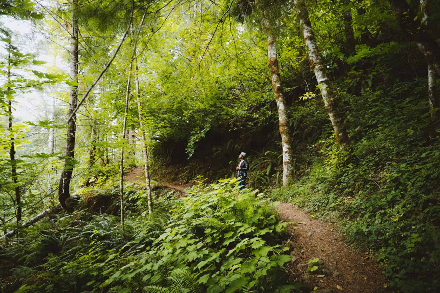 Forest Bathing in Willamette National Forest - TheMandagies.com