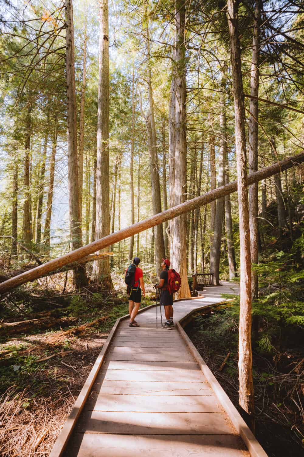 Trail of The Cedars - Easy Hikes In Glacier National Park - TheMandagies.com