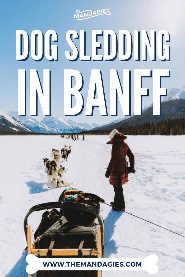 Curious about dog sledding in Banff? We're answering all your burning questions, including Banff dog sledding prices, what to expect, a Banff winter packing list, and so many more juicy details here! Save this for your next winter trip to Banff! #banff #dogsledding #canada #banffnationalpark #canmore #winter #vacation #alberta