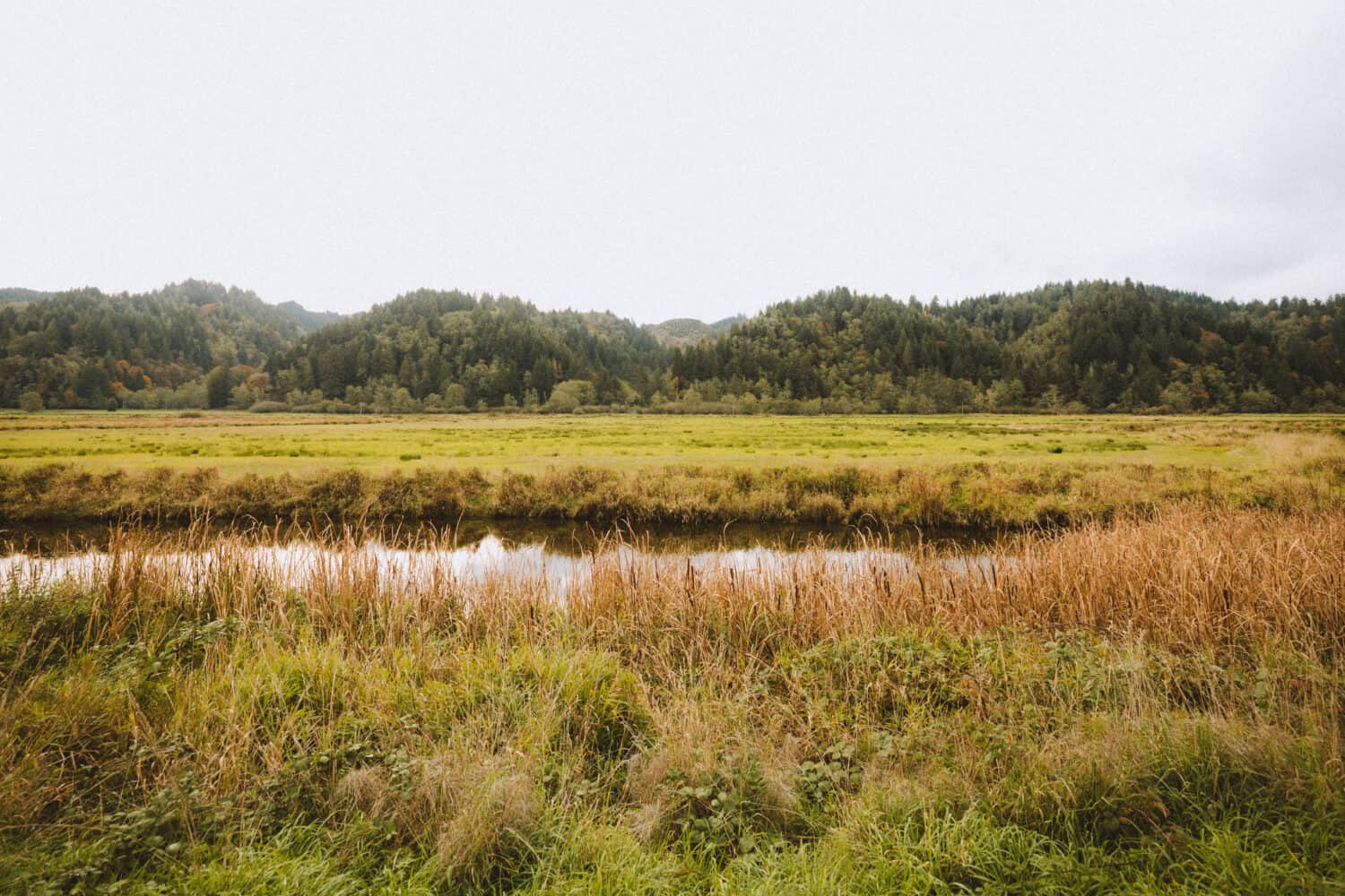 Dean Creek Elk Viewing Area - Things To Do In Coos Bay, Oregon - TheMandagies.com