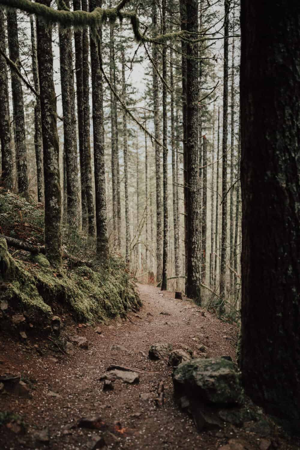 Rattlesnake Ledge Trail - Washington Winter Hikes - TheMandagies.com