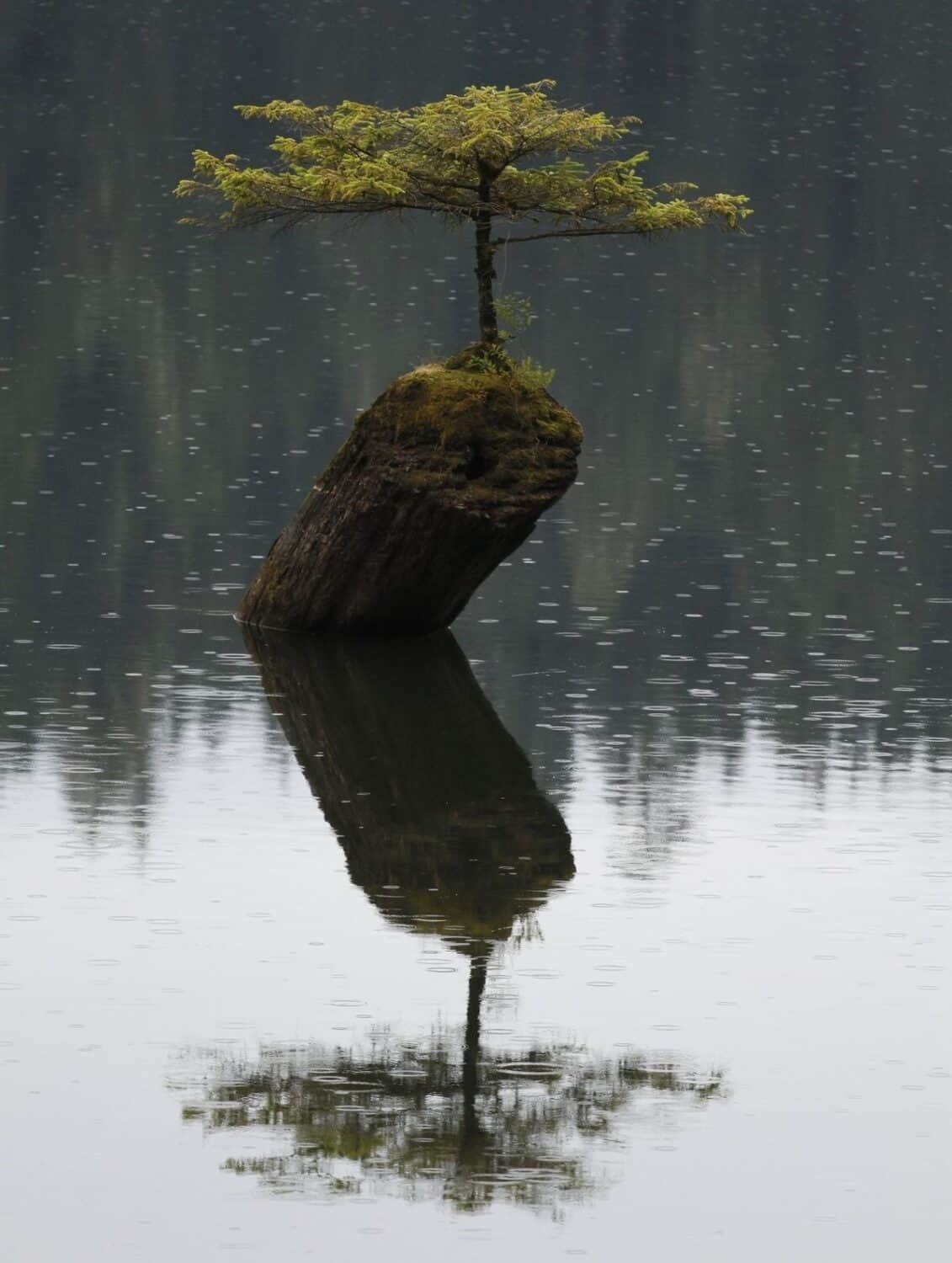Fairy Lake Bonsai Tree - Things To Do In Port Renfrew