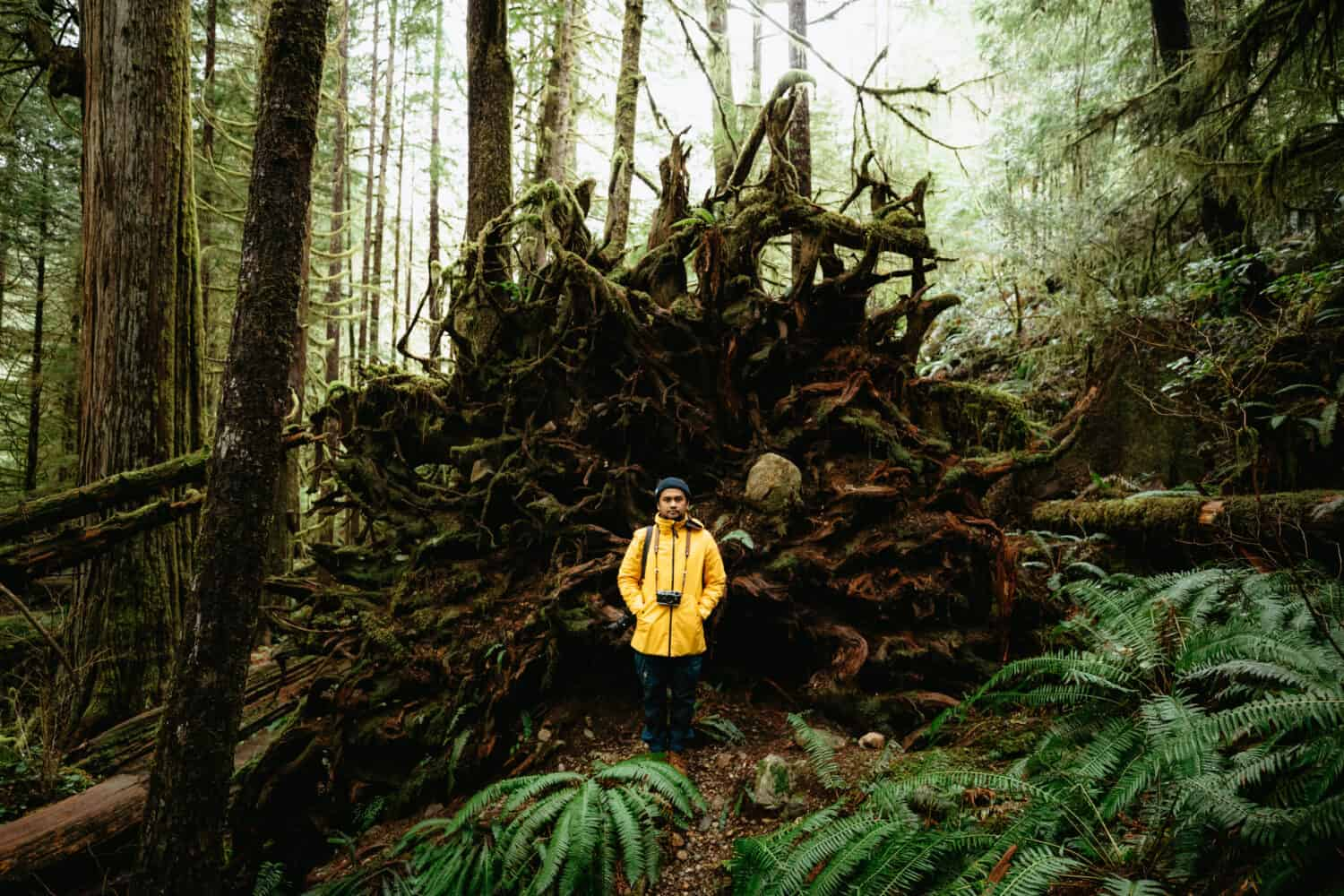 Berty Mandagie standing by tree roots at Avatar Grove, Vancouver Island - TheMandagies.com