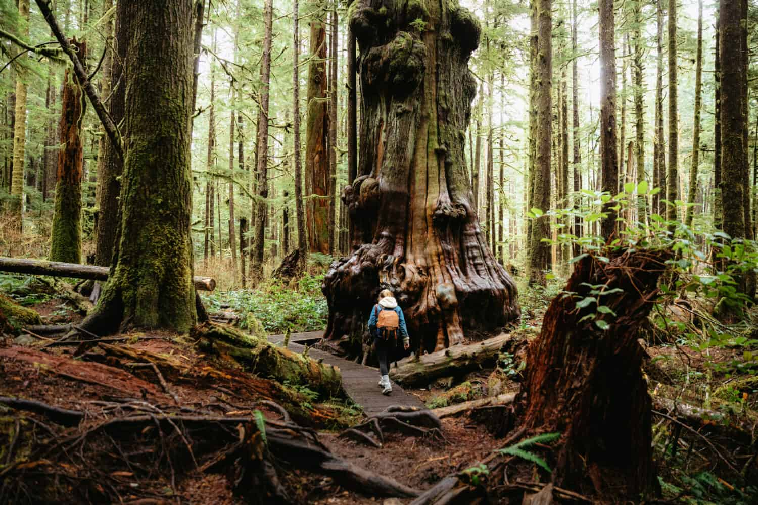 Emily Mandagie hiking in Avatar Grove - Old-Growth Forest in Vancouver Island